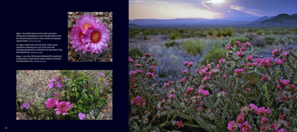 Texas Wildflowers Impressions - Interior 4