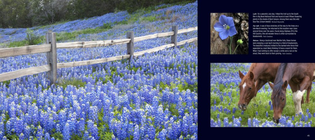 Texas Wildflowers Impressions - Interior 3